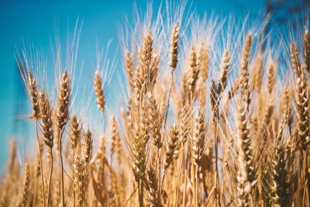 Do czego tak naprawdę nadaje się mąka pszenna czyli jak zastosować ją w naszej łazience?